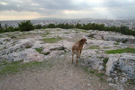 Stray dog - Pnyx – The hill between Acropolis and Piraeus